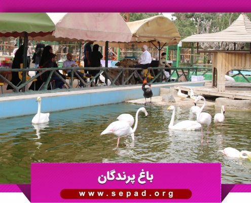 bagh3 495x400 - باغ پرندگان مشهد