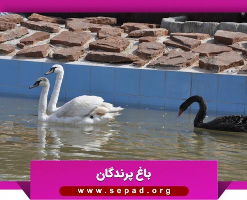 bagh5 495x400 - باغ پرندگان مشهد