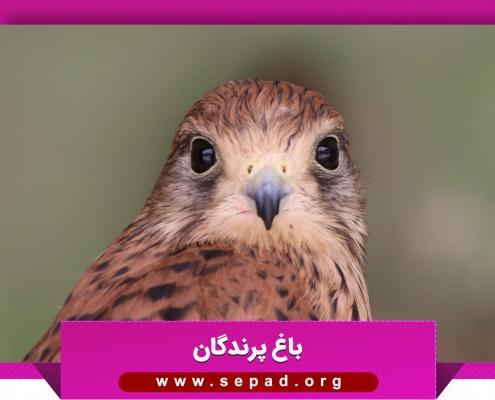 bagh6 495x400 - باغ پرندگان مشهد