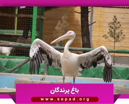 bagh7 495x400 - باغ پرندگان مشهد