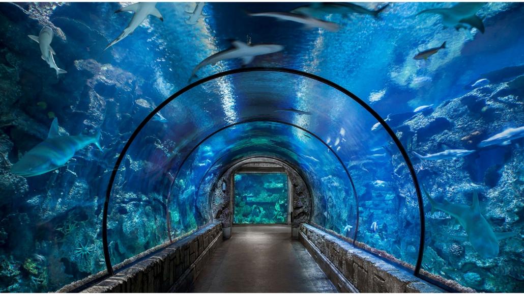 aquarium tunnel 1030x579 - تونل آکواریوم